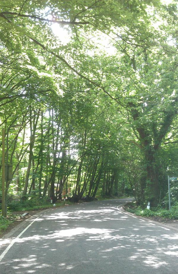 Summer Trees - Mocha