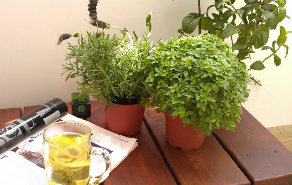 herbs and plants on the balcony