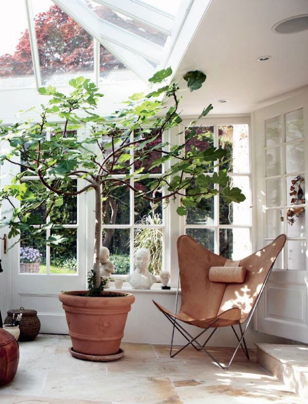 Biophilic design in the home