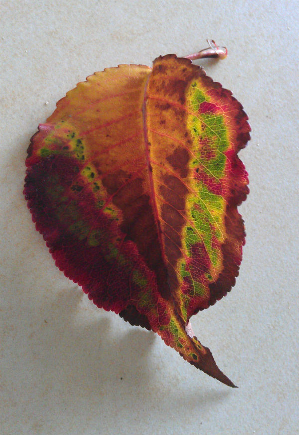 Colourful leaf inspired by nature