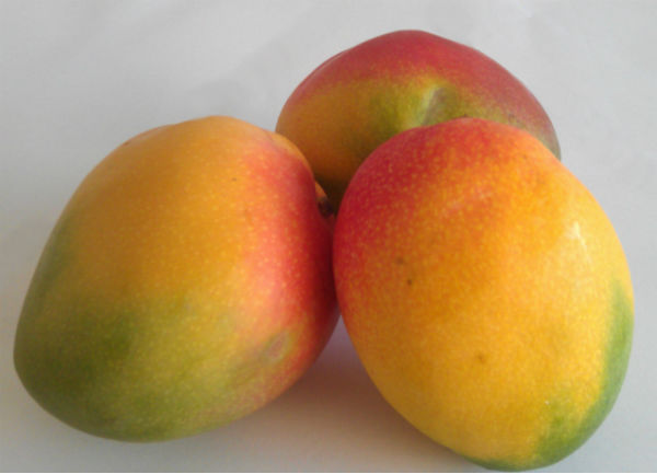 Mangoes inspired by nature