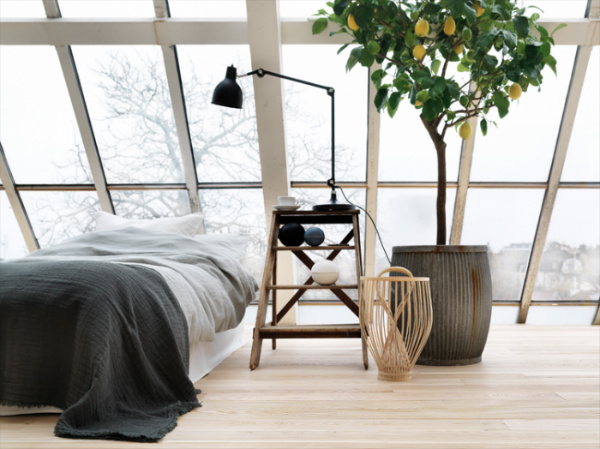 Bedroom with lemon tree