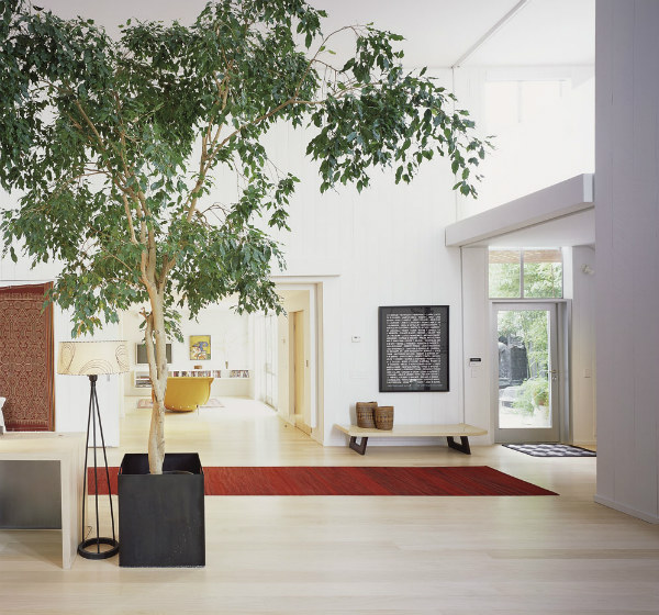 Biophilic design with indoor tree