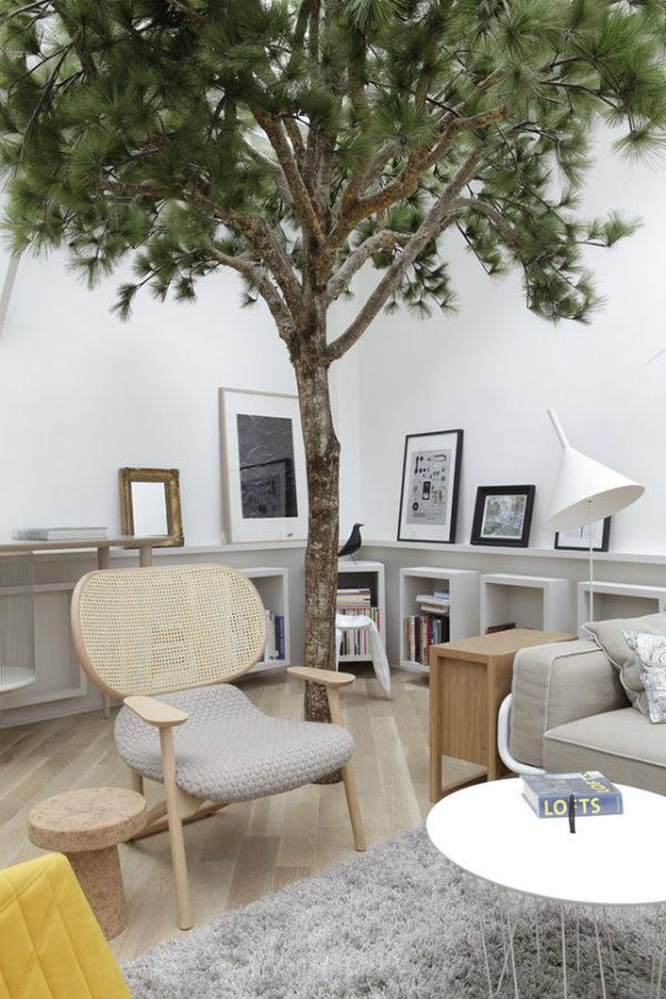 New Trend Alert Indoor Trees Mocha Casa Blog