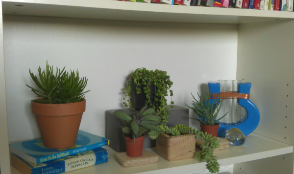 plant shelfie urban jungle bloggers