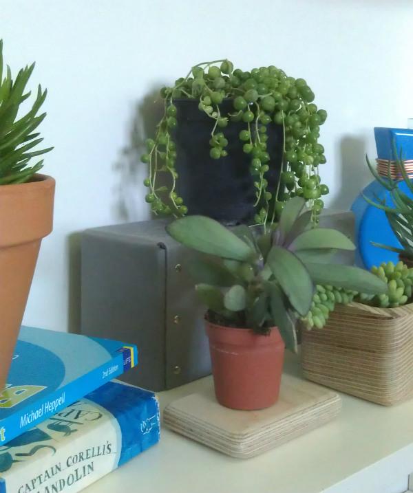 urban jungle bloggers my plant shelfie