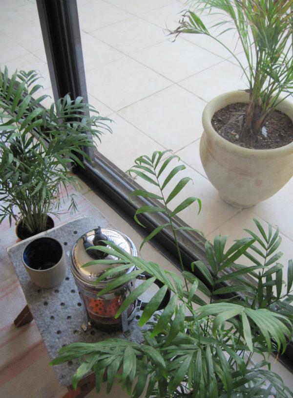 Areca palms and coffee - Urban Jungle Bloggers