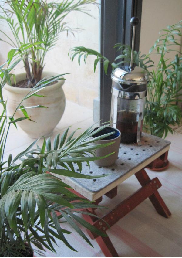 Areca Palms - Urban Jungle Bloggers