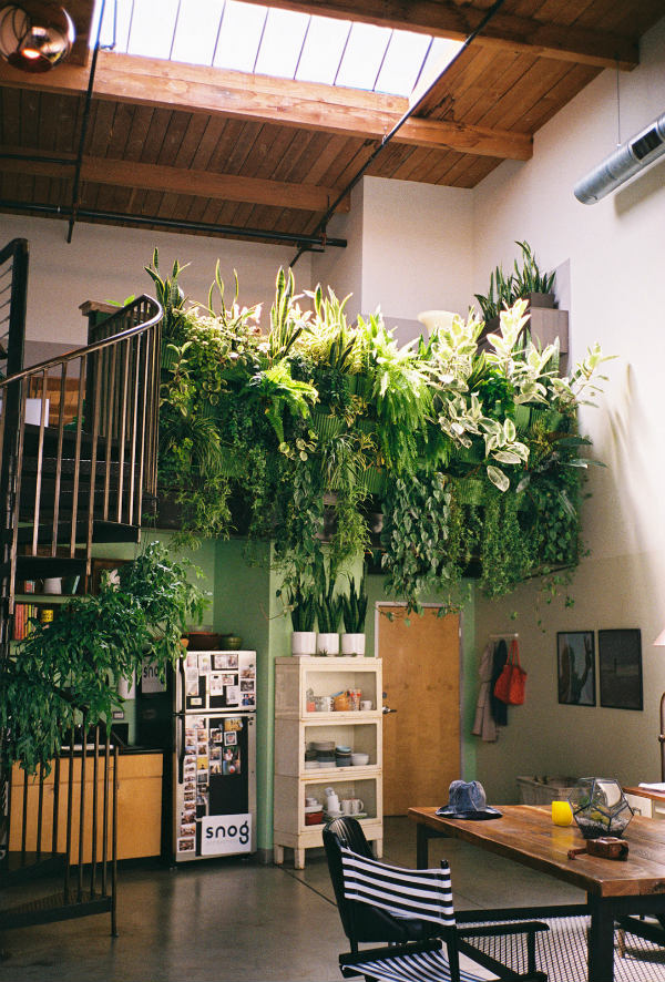 Interior with living wall of plants