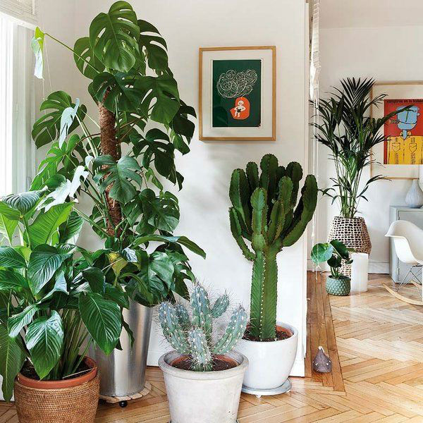Ten reasons to have plants in your home biophilia for Home decor with plants