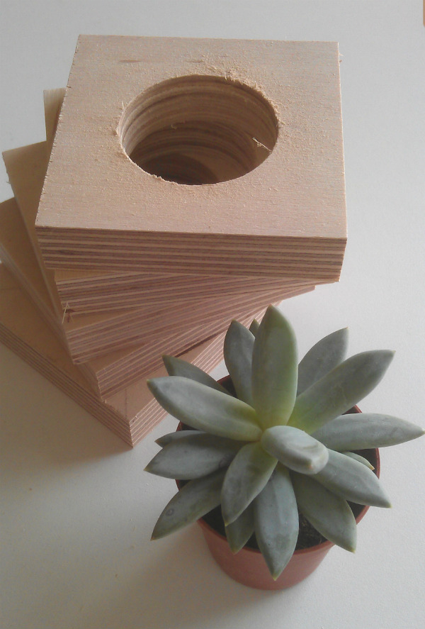 Hanging planter tutorial - Succulent with birch plywood - Mocha