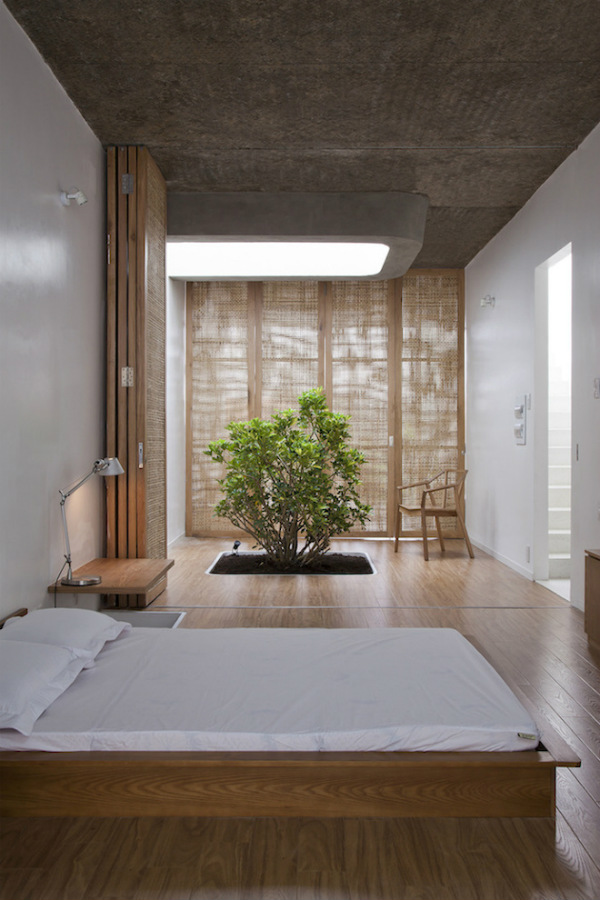 Bedroom with indoor tree