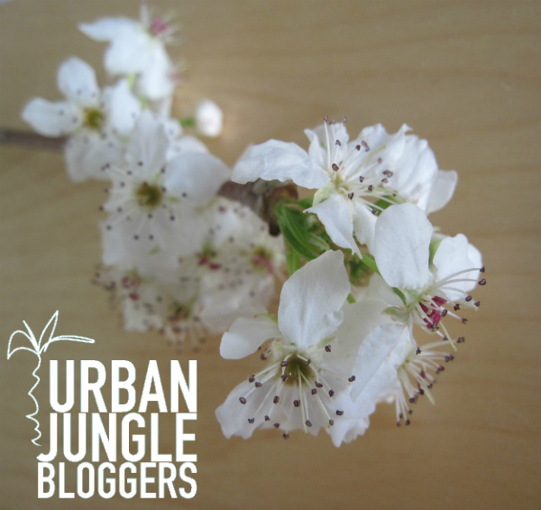 Urban Jungle Bloggers spring styling from Moch - blossoms for spring
