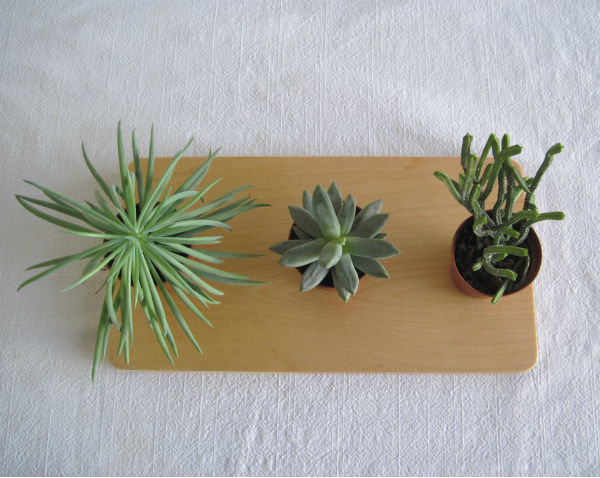 Succulents on a plywood tray from Mocha