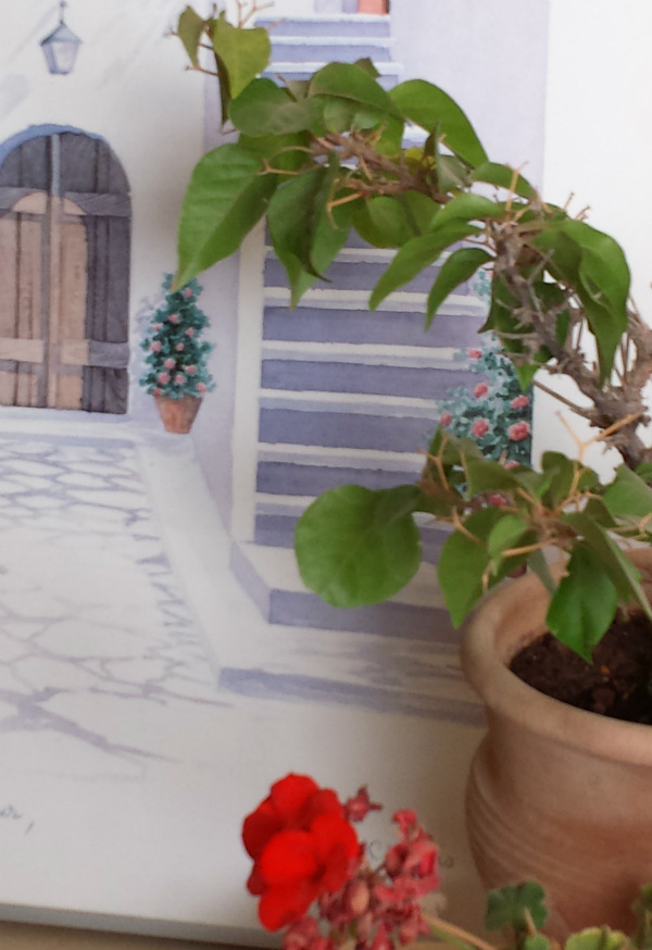 Mediterranean plants bougainvillea and geranium Mocha Casa