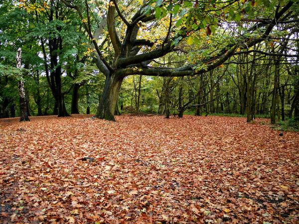 Autumn leaves in Hampstead Heath