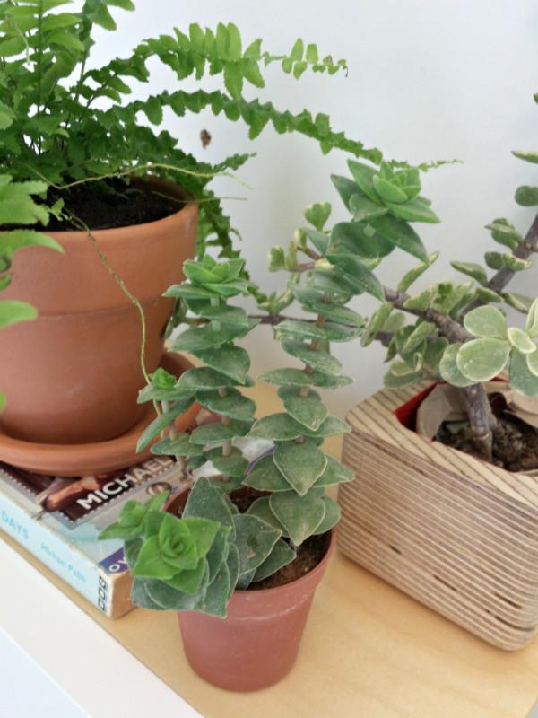 Plant Shelfie Urban Jungle Bloggers from Mocha