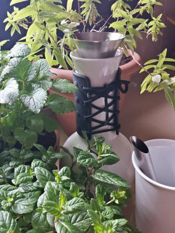 Fresh herbs for herbal tea - Urban Jungle Bloggers kitchen greens