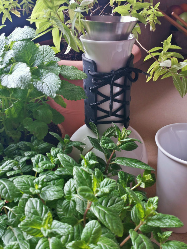 Fresh herbs for herbal tea