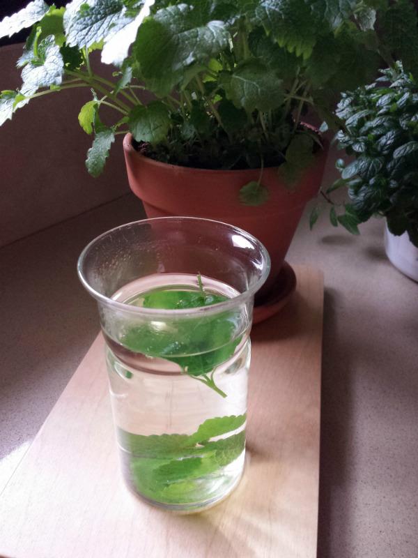 How to make fresh herbal tea