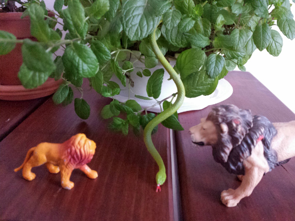 Jungle animal figurines and a mint plant - mochacasa