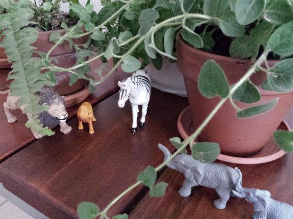 Jungle animals and plants urban jungle bloggers - mochacasa