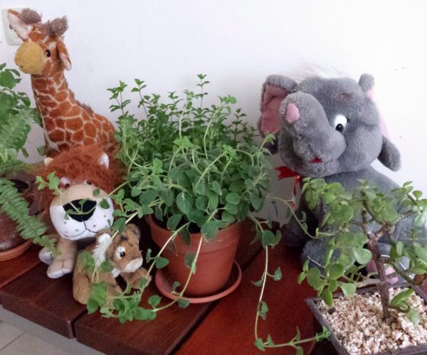 Plants and jungle teddy bears - urban jungle bloggers - mochacasa