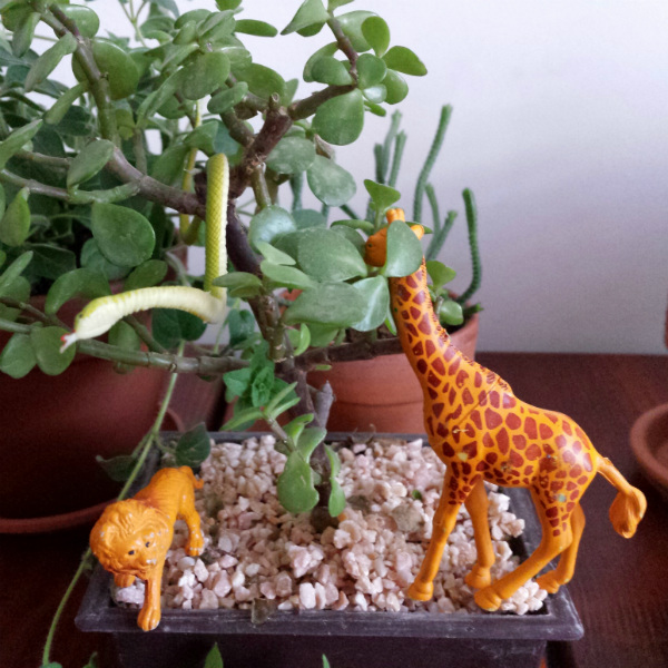 Succulents and jungle animals for Urban Jungle Bloggers - mochacasa