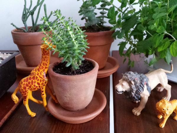 Urban Jungle Bloggers plants and jungle animals - mochacasa