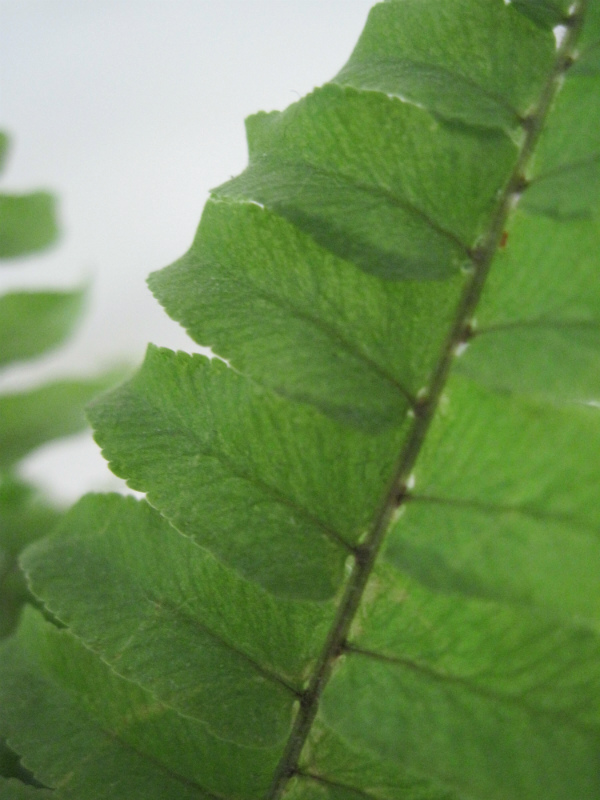 Extreme close up of a fern leaf for Urban Jungle Bloggers Botanical Zoom on Mocha Casa Blog