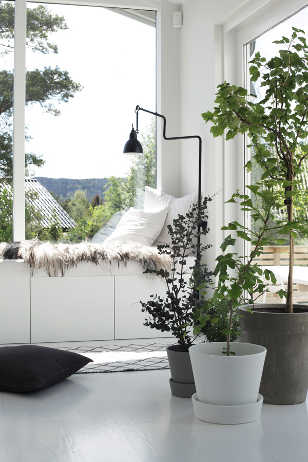 Biophilic design living room with plants and