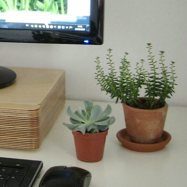 Succulents on the desk on Mocha Casa blog