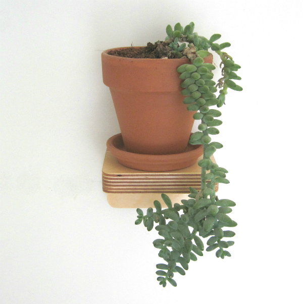 Piccolo Shelf from Mocha Casa with trailing succulent plant