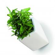 off-the-wall-plant-pots-mocha-3