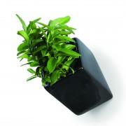 off-the-wall-plant-pots-mocha-4