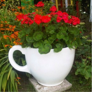 Tea Cup Planter by Holly Palmer from Mocha