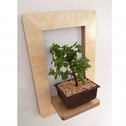marco-frame-shelf-bonsai-mochacasa