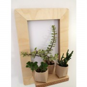 marco-frame-shelf-succulents-mochacasa