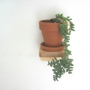 piccolo-shelf-hanging-succulent-mochacasa